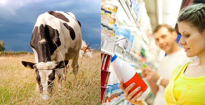 Southeast Dairy Association - Dairy Farming in the South: From Farm to Fridge