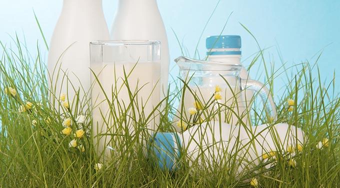 Southeast Dairy Association - organic milk versus regular milk